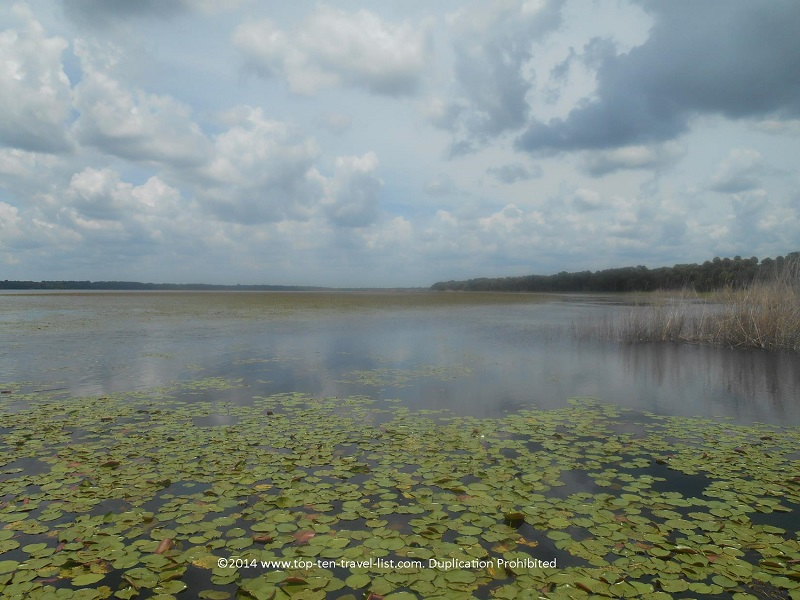 The Upper Myakka Lake is gorgeous on a cloudy day - taken from the Gator Gal airboat ride