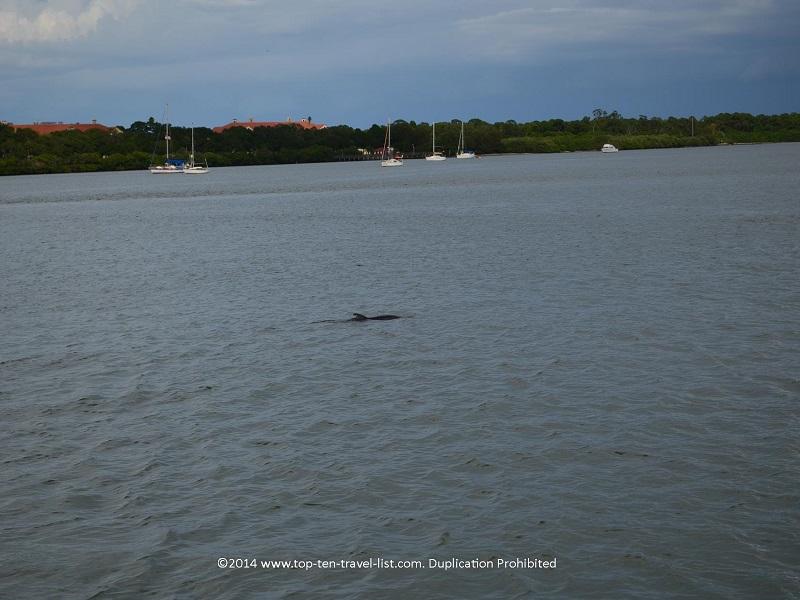 Dolphin spotting in Madeira Beach, Florida