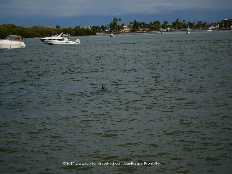 Dolphin spotting - Madeira Beach, Florida cruise
