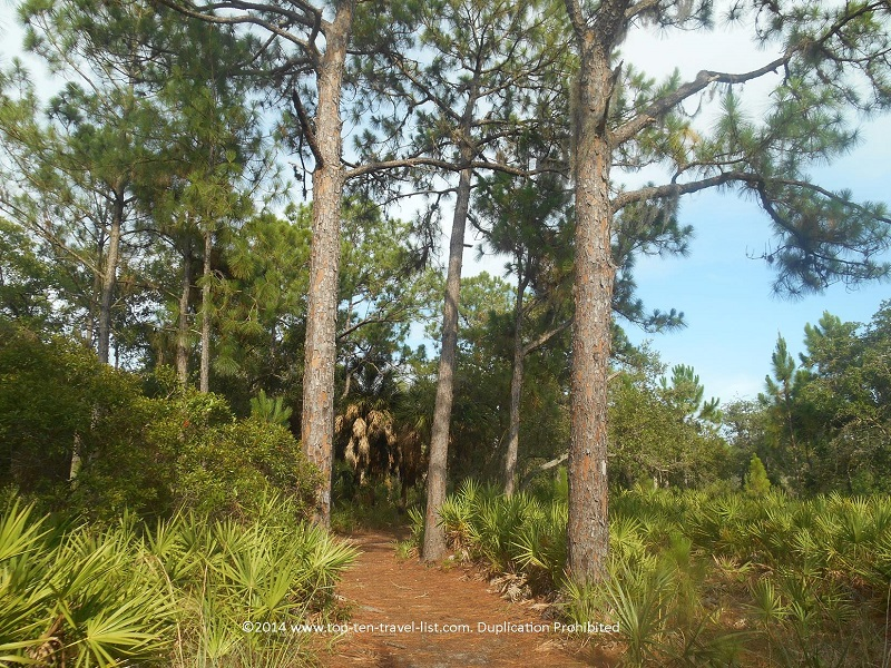 Peaceful tree lined views at Weedon Island Preserve - St. Petersburg, Florida