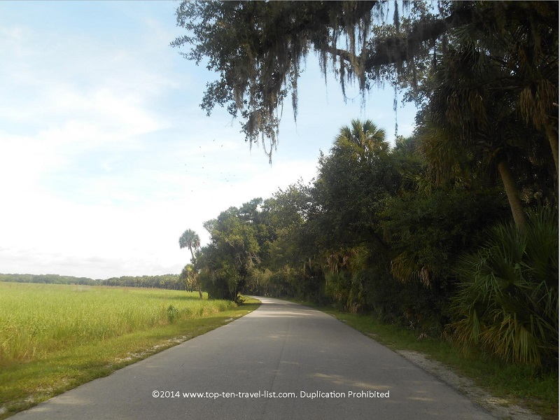 Gorgeous scenic trail at Myakka River State Park in Sarasota, Florida
