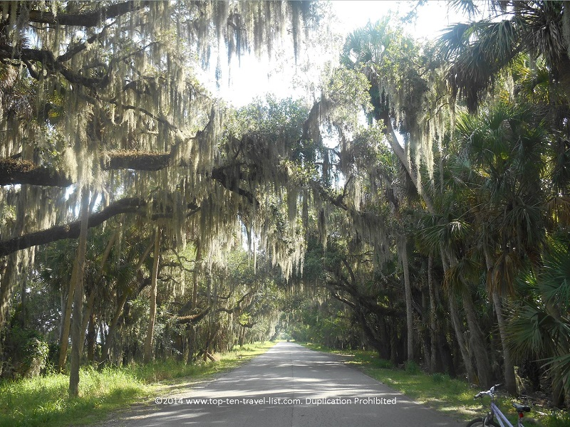Biking through a beautiful tunnel of trees at Myakka River State Park in Sarasota, Florida
