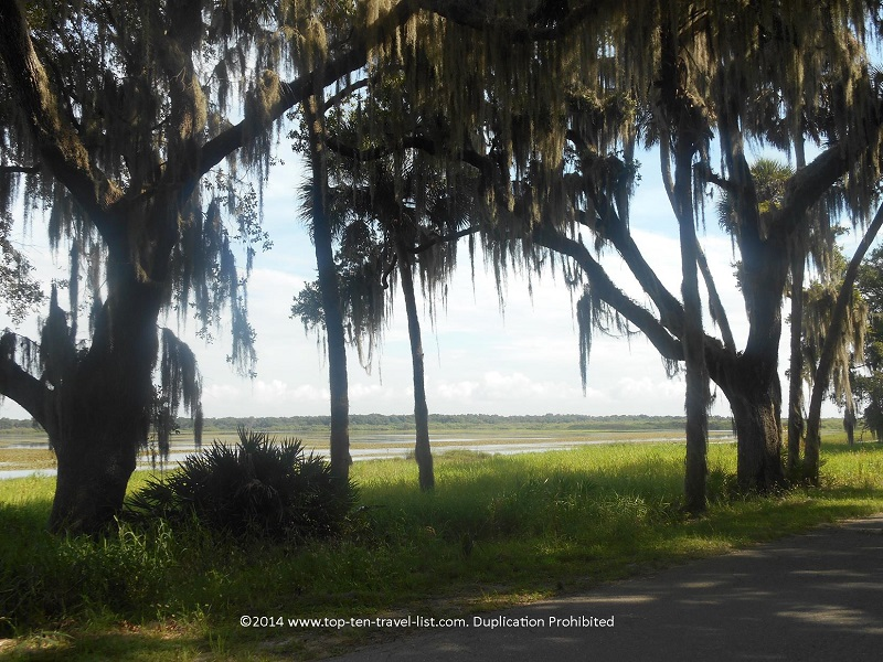 Beautiful tree and lake views along the Myakka River State Park scenic trail - Sarasota, Florida