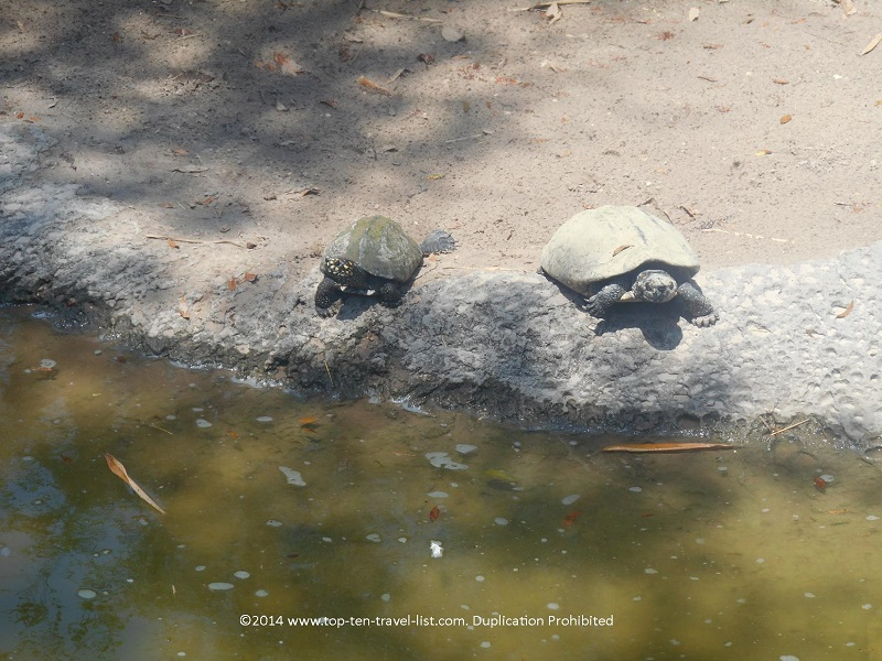 Turtles at Tampa's Lowry Park Zoo