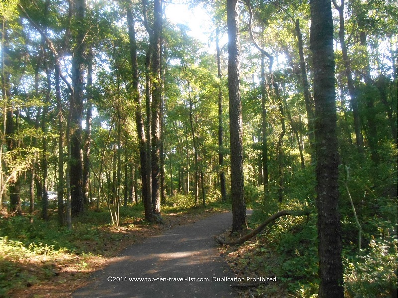 Beautiful wooded trail in South Carolina's Huntington Beach State Park