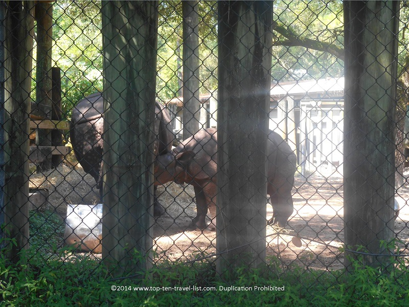 Baby rhino at Tampa's Lowry Park Zoo