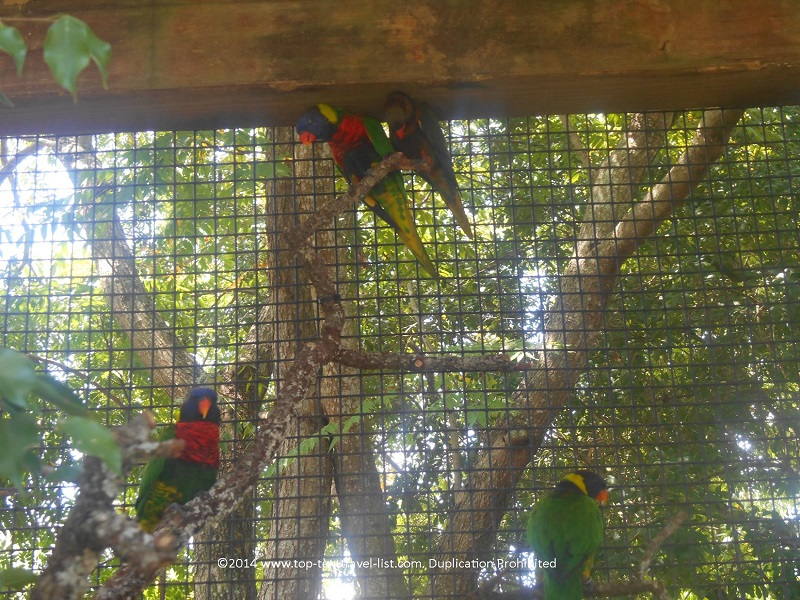 Birds in the aviary at Tampa's Lowry Park Zoo
