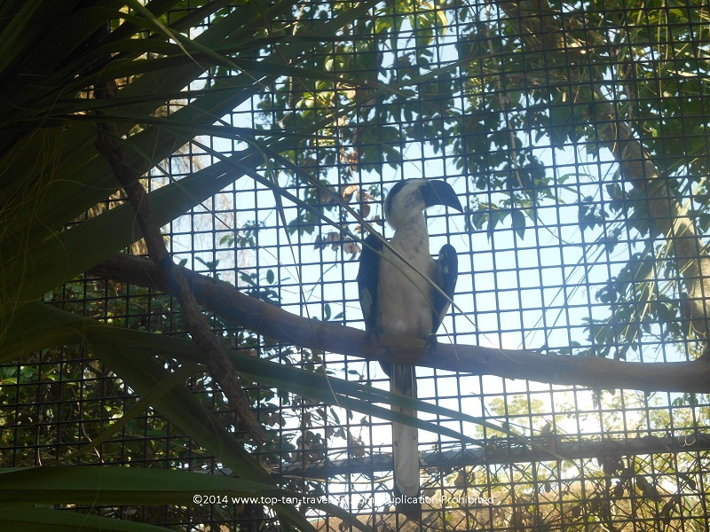 Cool looking bird at Tampa's Lowry Park Zoo