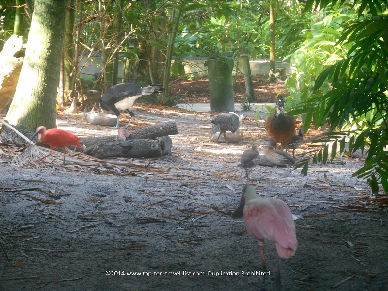 Various birds in the Aviary at Tampa's Lowry Park Zoo