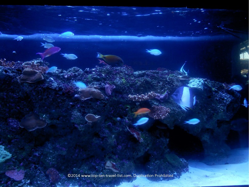 Colorful Indian Coral Reef at The Florida Aquarium - Tampa, Florida