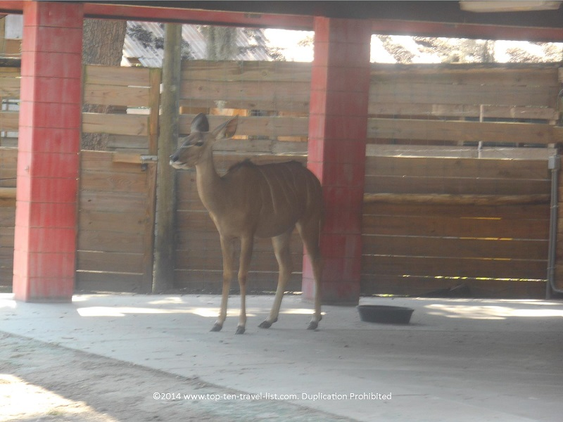 Deer on the safari ride at Tampa's Lowry Park Zoo