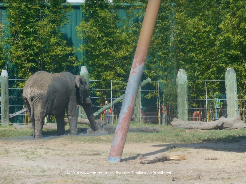Elephant seen on safari ride at Tampa's Lowry Park Zoo