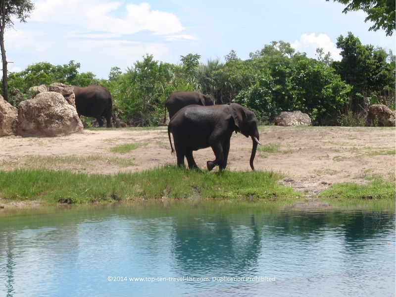 Elephant seen from the safari ride at Disney's Animal Kingdom