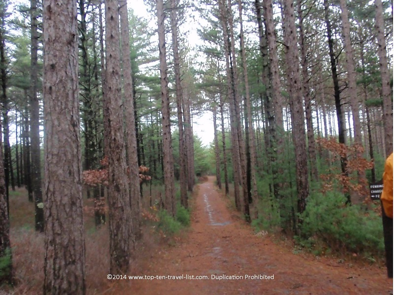 Fall at Myles Standish State Forest - Massachusetts