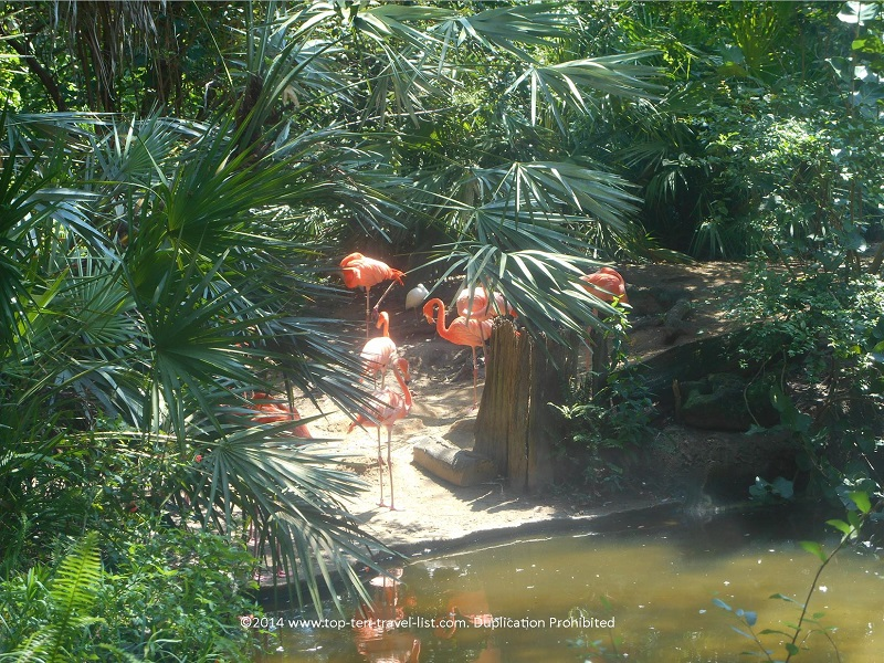 Flamingos at Tampa's Lowry Park Zoo