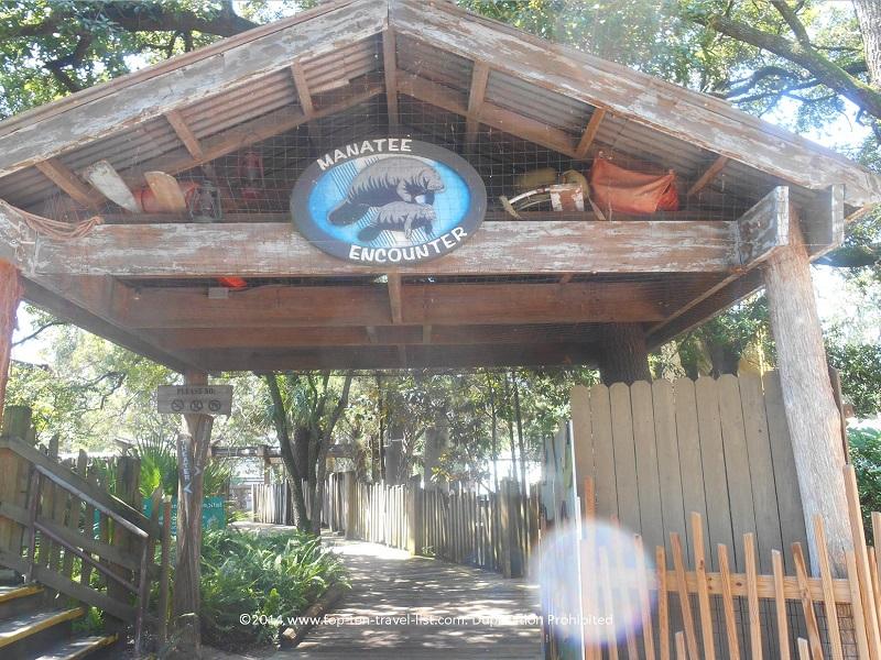 Manatee Encounter at Tampa's Lowry Park Zoo