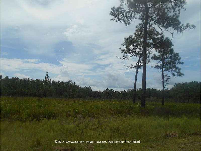 Beautiful forest views at Tampa's Flatwoods Park
