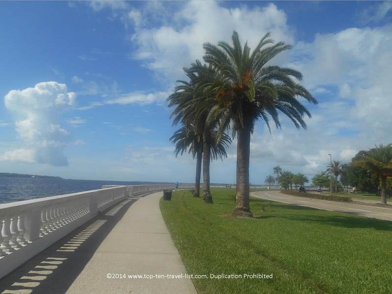 Palm trees on Tampa's Bayshore Blvd. path