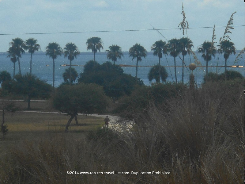 Palms on the Fort De Soto park recreation trail in St. Petersburg, Florida