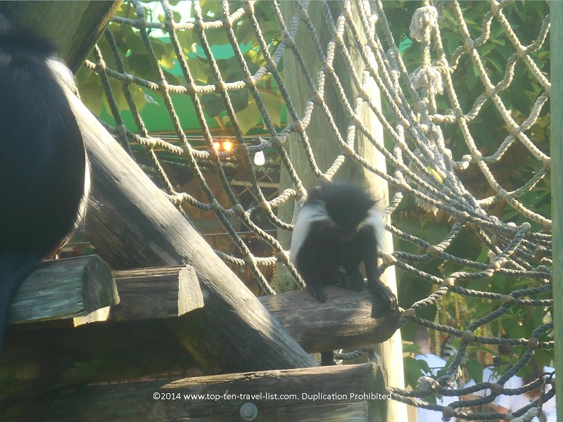 Monkeys in Primate World at Tampa's Lowry Park Zoo