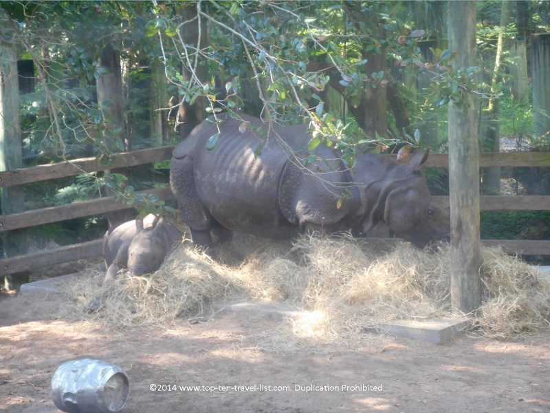 Rhino at Tampa's Lowry Park Zoo