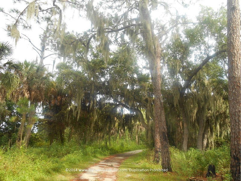 Spanish moss tree on the Uplands Trail at Boyd Hill Nature Preserve