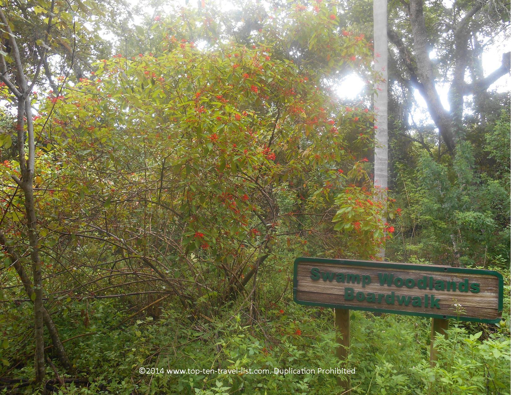 Swamp Woodlands Boardwalk at Boyd Hill Nature Preserve in St. Petersburg, Florida