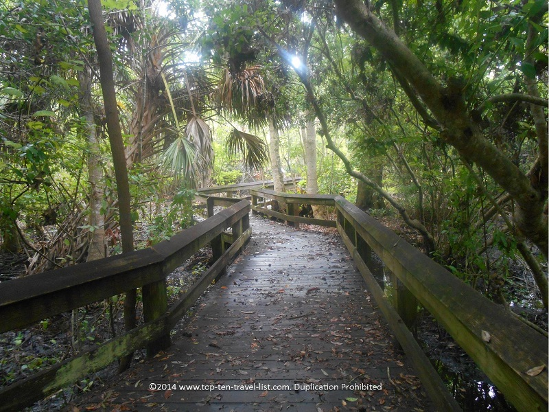 Swamp Woodlands boardwalk at Boyd Hill Nature Preserve in St. Petersburg, Florida
