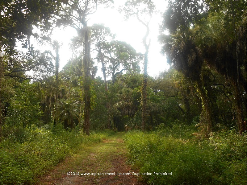 Gorgeous nature views on the Uplands Trail at Boyd Hill Nature Preserve - St. Petersburg, FL