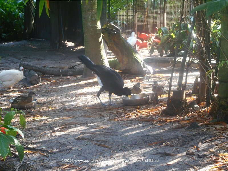 Strange looking black bird at The Aviary at Tampa's Lowry Park Zoo