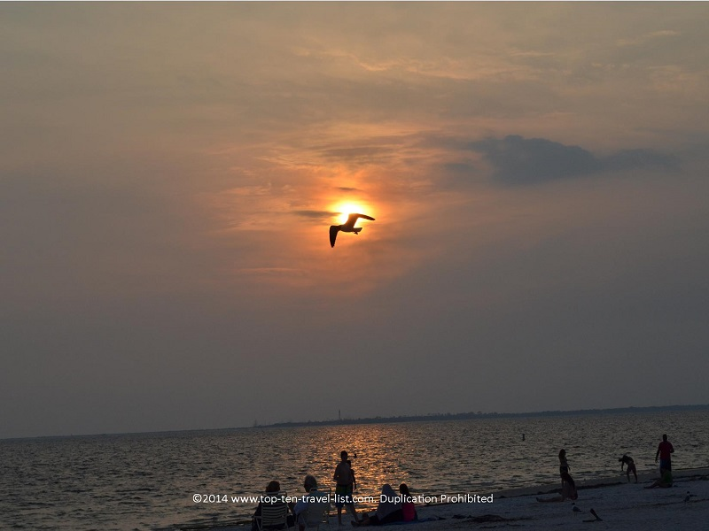Bird flying over the sunset at Fred Howard Park in Tarpon Springs, Florida