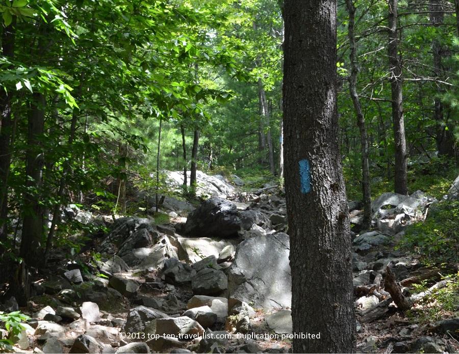 Blue trail marker at Boston's Blue Hills Reservation