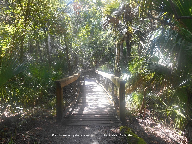 Boardwalk along the River Rapids Trail at Hillsborough River State Park in Tampa, Florida