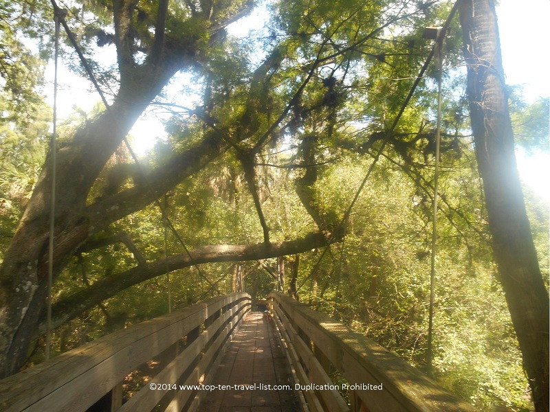 Walking along the historic suspension bridge at Hillsborough River State Park near Tampa, Florida