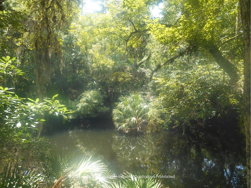 Pretty water views from the suspension bridge at Hillsborough River State Park near Tampa, Florida