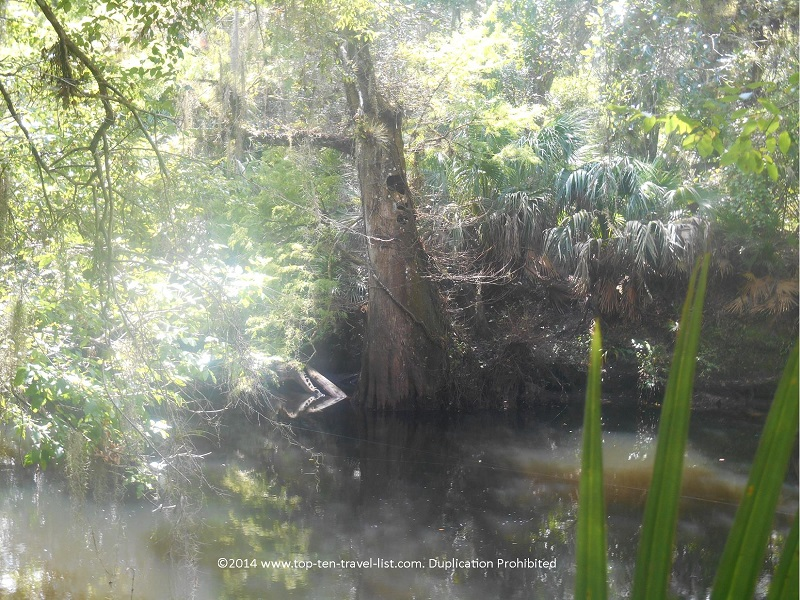Swamp views along the Banyan Trail at Hillsborough River State Park near Tampa, Florida