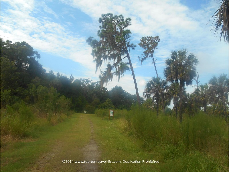 Scenic palm trees along The Wetlands Trail at Hillsborough River State Park near Tampa, Florida