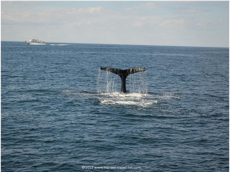 Plenty of whale sightings on Plymouth's Captain John's cruise