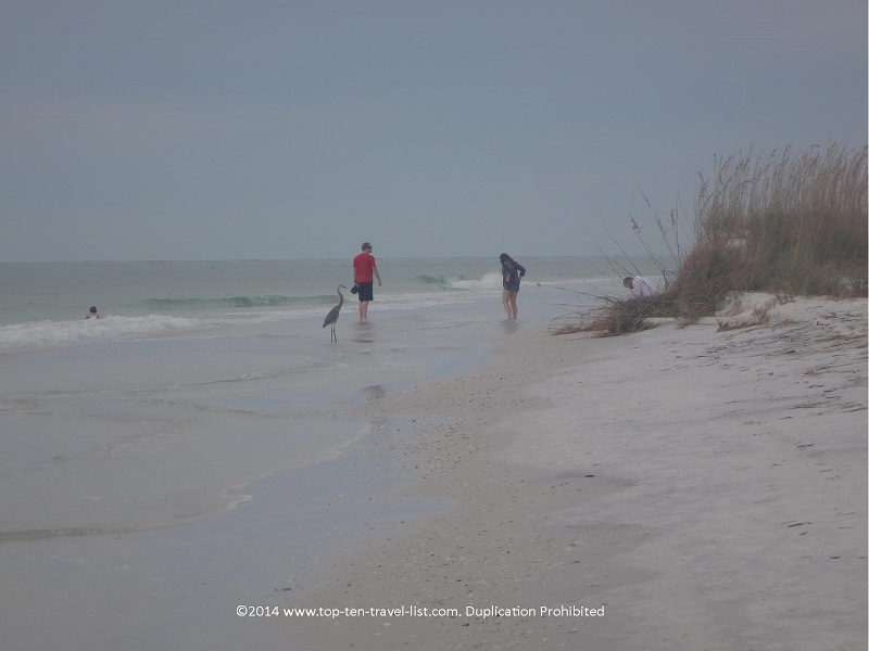 Taking a stroll along Anna Maria Island beach in Florida