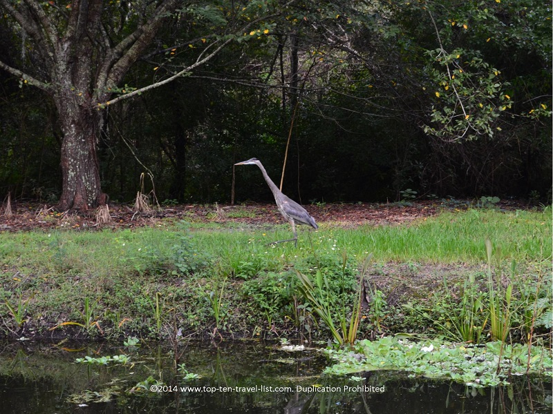 Birdwatching in St. Petersburg, Florida - Sawgrass Lake Park