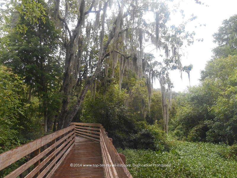 A view of the boardwalk trail at Lettuce Lake Park in Tampa, Florida