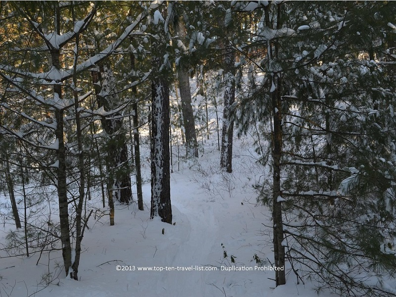 Cross country skiing at Myles Standish State Forest in Carver, Massachusetts