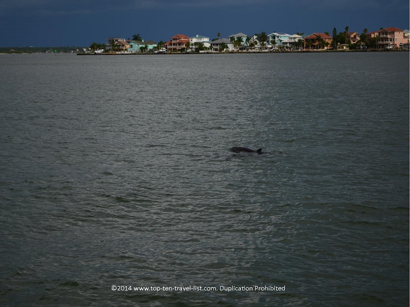 View of a dolphin on the Hubbard's Marina Dolphin Cruise