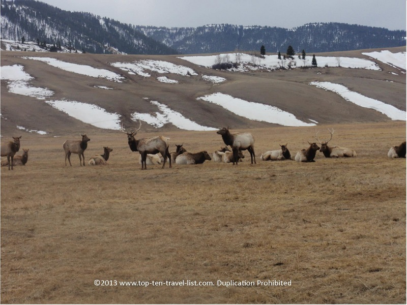 The National Elk Refuge in Jackson Hole, Wyoming