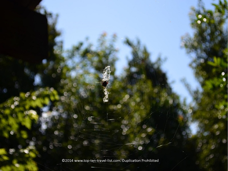 Spider web at Sawgrass Lake Park in St. Petersburg, Florida