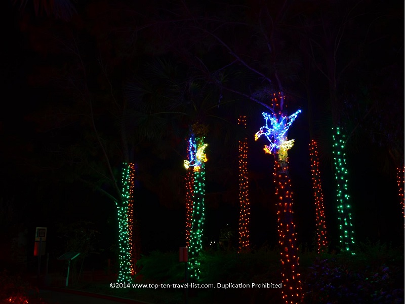 Birds and palm tree light display at Florida Botanical Gardens - Holiday Lights 2014