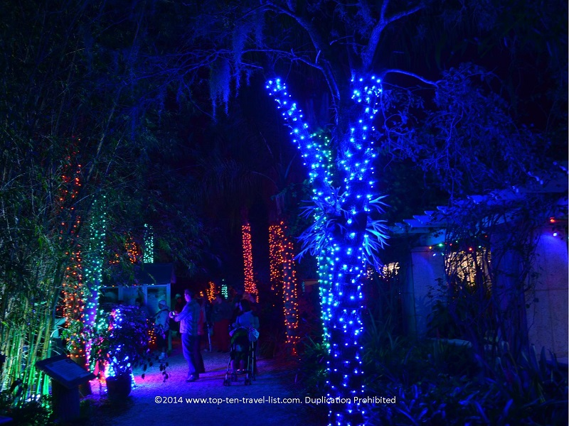 Cool blue lights at Florida Botanical Gardens - Holiday Lights 2014