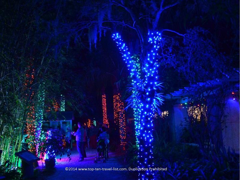 Cool blue lights at Florida Botanical Gardens - Holiday Lights 2014