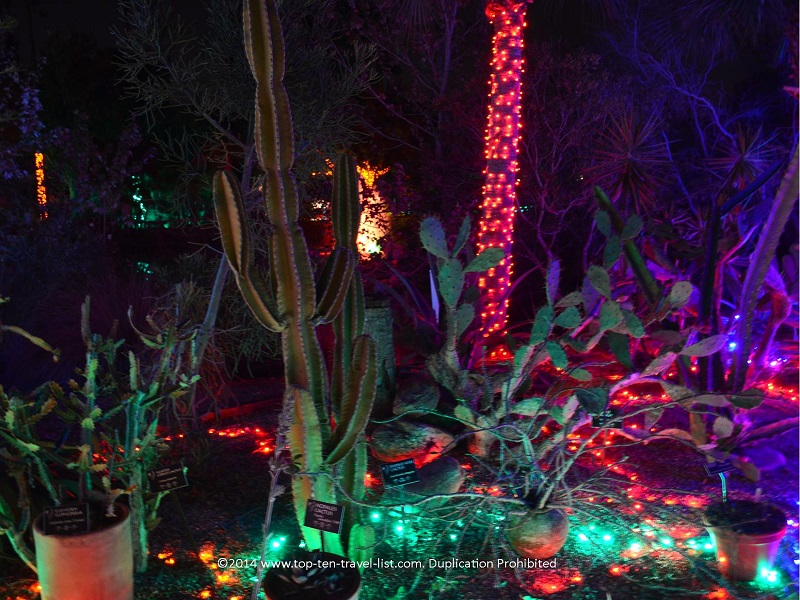 Cactus light display at Florida Botanical Gardens