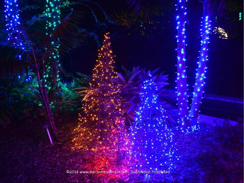 Gorgeous tree lights at Florida Botanical Gardens - Holiday Lights 2014